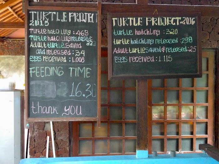 TurtleRehab-Board