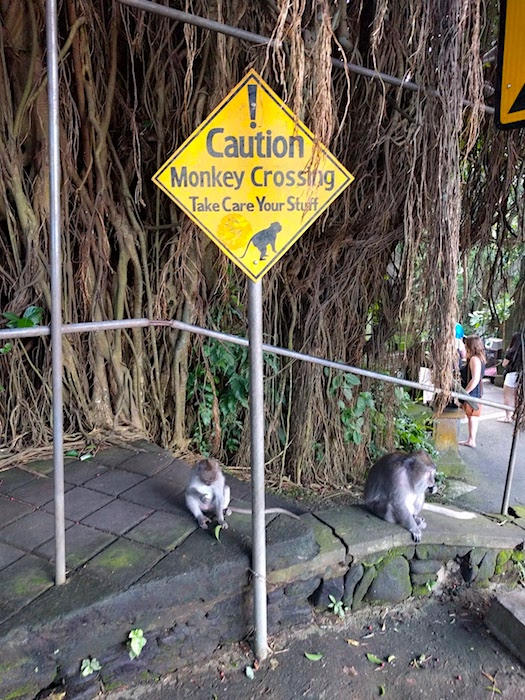 Ubud_MonkeyCrossing1
