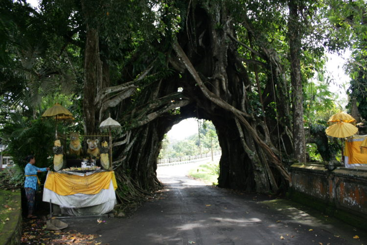 road through banyan tree