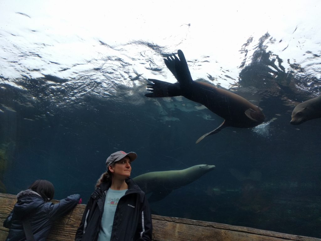 Sea lions at the zoo