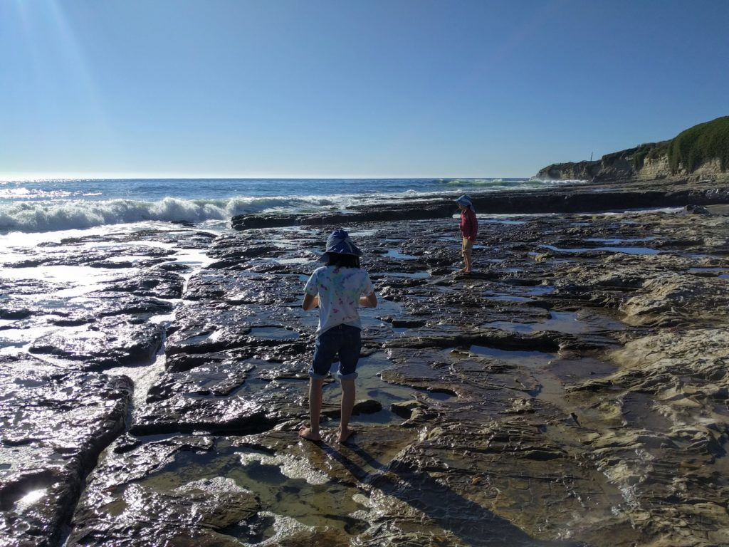 tide pooling in Santa Cruz