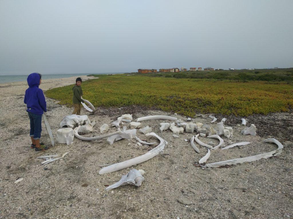 Whale bones near Laguna San Ignacio